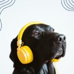 A black dog wearing yellow headphones