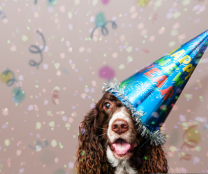 A dog wearing a Happy New Year hat